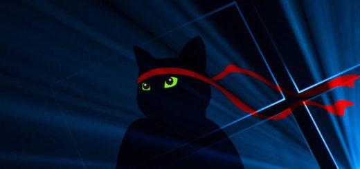 Windows Insider Anniversary Ninja Cat