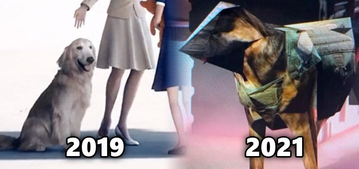 Pes (Dog) in-game 2019 Ace Combat vs 2021 Call of Duty